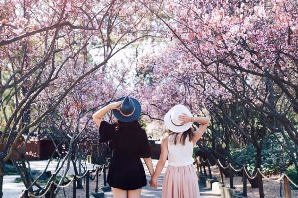 Phân biệt du học Nhật Bản tự túc và du học Nhật Bản vừa học vừa làm