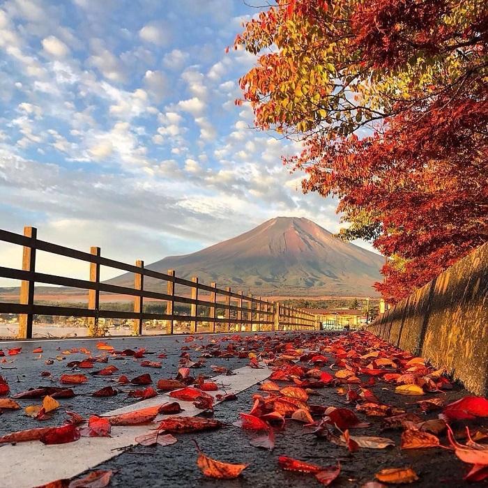 Những con đường ngập lá vàng của mùa thu Nhật Bản