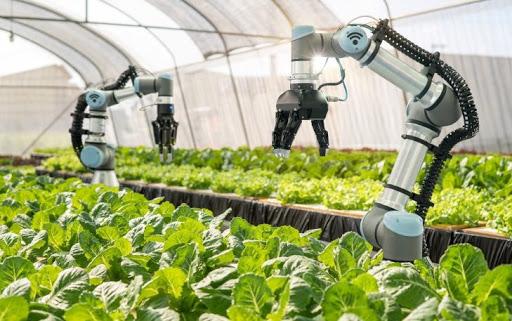 Nông nghiệp thông minh Nhật Bản cực kỳ phát triển