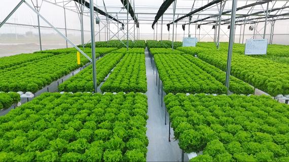 Ngành nông nghiệp rất quen thuộc với người lao động Việt Nam