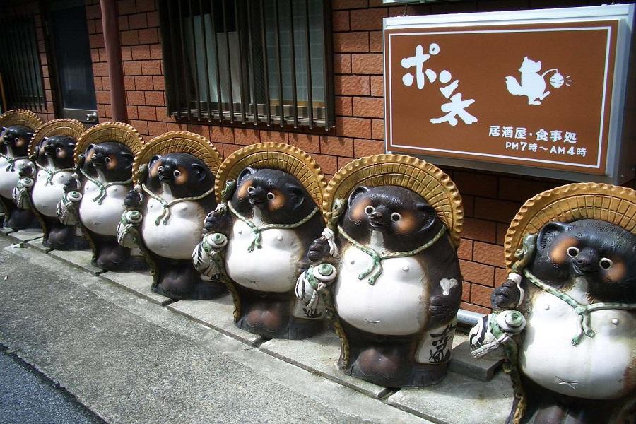 Chú chó gấu trúc Tanuki biểu tương may mắn của Nhật Bản