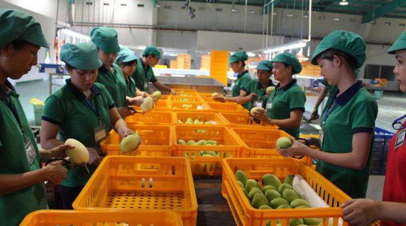 Đi xuất khẩu Nhật Bản đem đến lợi ích gì cho lao động?