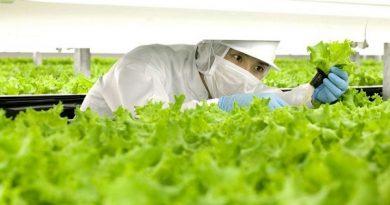 Tại sao bạn nên đi XKLĐ nhật bản ngành nông nghiệp?