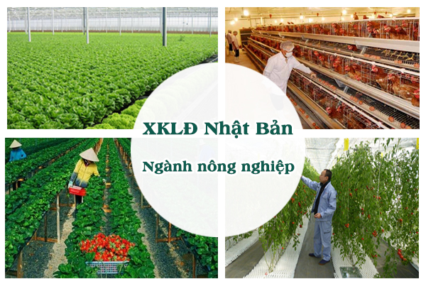 Đơn tuyển dụng nông nghiệp Nhật Bản gồm những công việc nào?