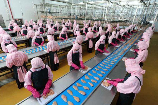 XKLĐ ngành Chế biến thực phẩm - Chọn lựa số 1 cho lao động đi Nhật