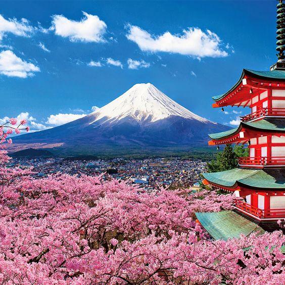 Lễ hội Hanami được xem là lễ hội mùa xuân của cuộc sống