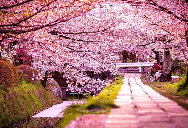 Các hoạt động trong lễ hội hoa anh đào Nhật Bản Hanami