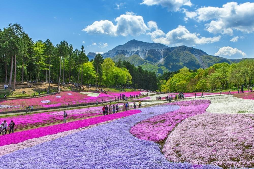 Địa điểm sống ảo cực chất cho ae ở Tokyo và Saitama
