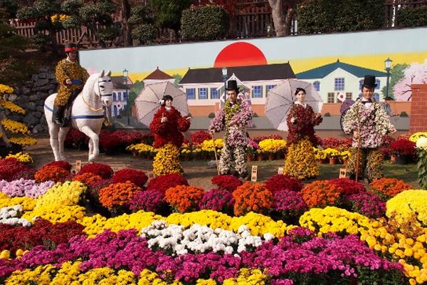 Lễ hội hoa cúc Nhật Bản tháng 11 hàng năm