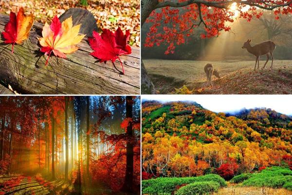 thung lũng Korankei được đông đảo khách du lịch bầu chọn là điểm ngắm lá mùa thu đẹp nhất miền Trung đất nước Phù Tang.