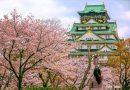 Mùa anh đào ở lâu dài Osaka Nhật Bản