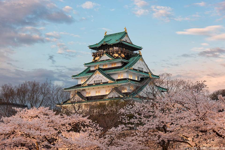 Lâu đài Osaka và những đóa anh đào đẹp nhất xứ Phù Tang