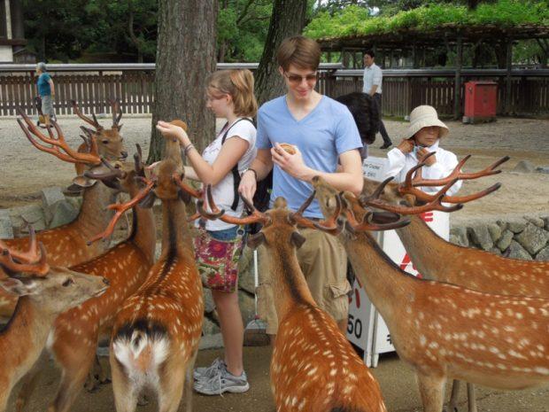 Công viên Nara Nhật Bản
