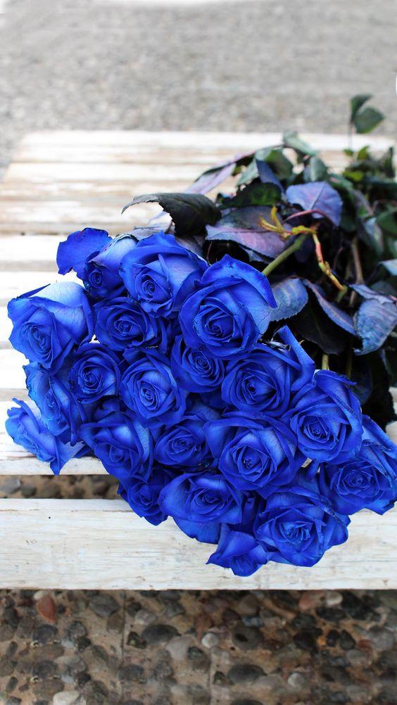 Những đóa hông mang một màu xanh dương đặc biệt