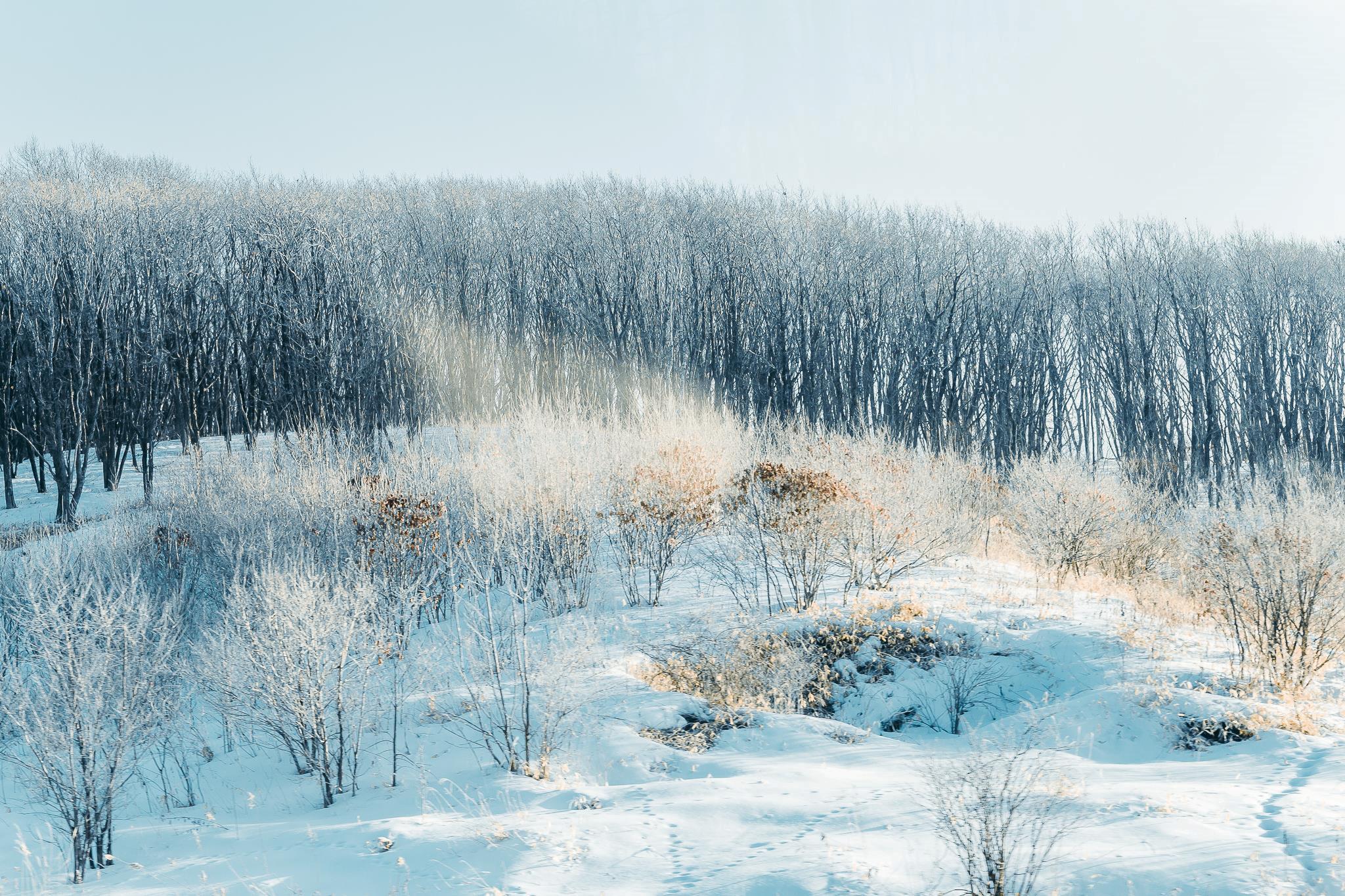 Ngắm nhìn một Hokkaofo đắm mình trong làn tuyết trắng