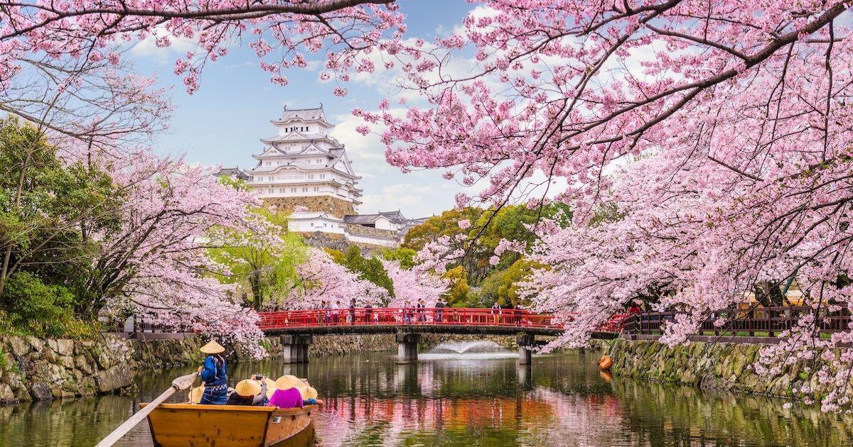 Mùa xuân ấm áp, cùng ngắm hoa anh đào nở rộ khắp Osaka