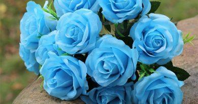 Ý nghĩa của hoa hồng xanh